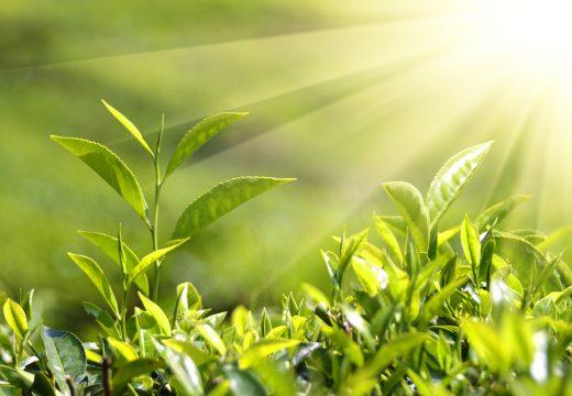 """Нaционален конкурс за есе на тема: """"Растенията на утрешния ден"""""""